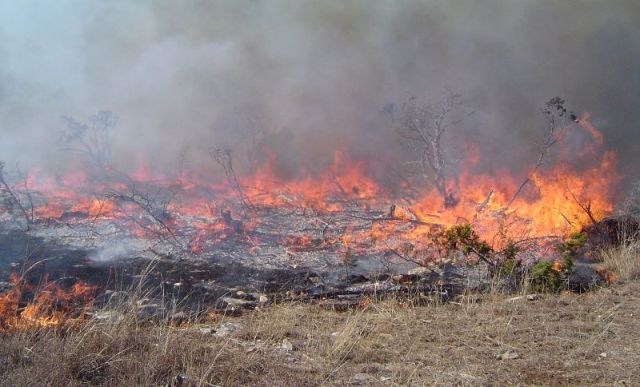 Prescribed burn on the Rodgers plateau in January 2009.